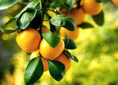 Польза мандаринов для организма человека, витамины